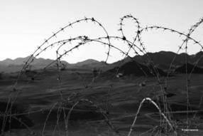 Barbed wire in the desert