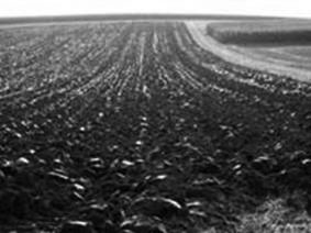 Ploughed field in Bavaria