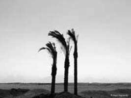 Three proud palms